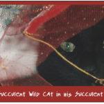 Succulent Wild Cat
